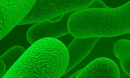 Probióticos Lab2Pro™: 6 benefícios para suas formulações
