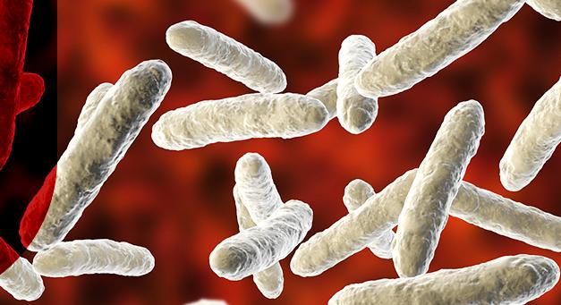 Probióticos manipulados: As vantagens para sua farmácia